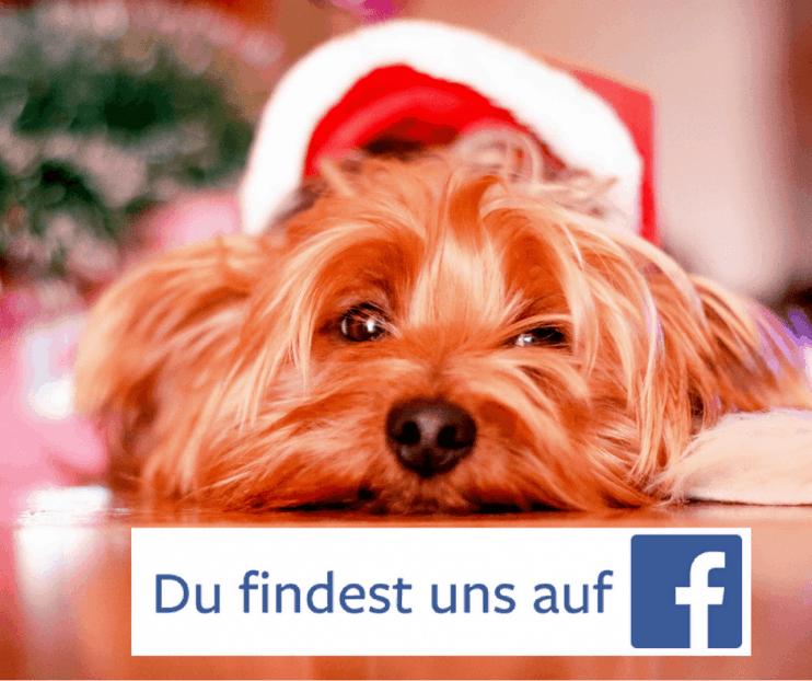 Der DBTB ist bei Facebook! 1