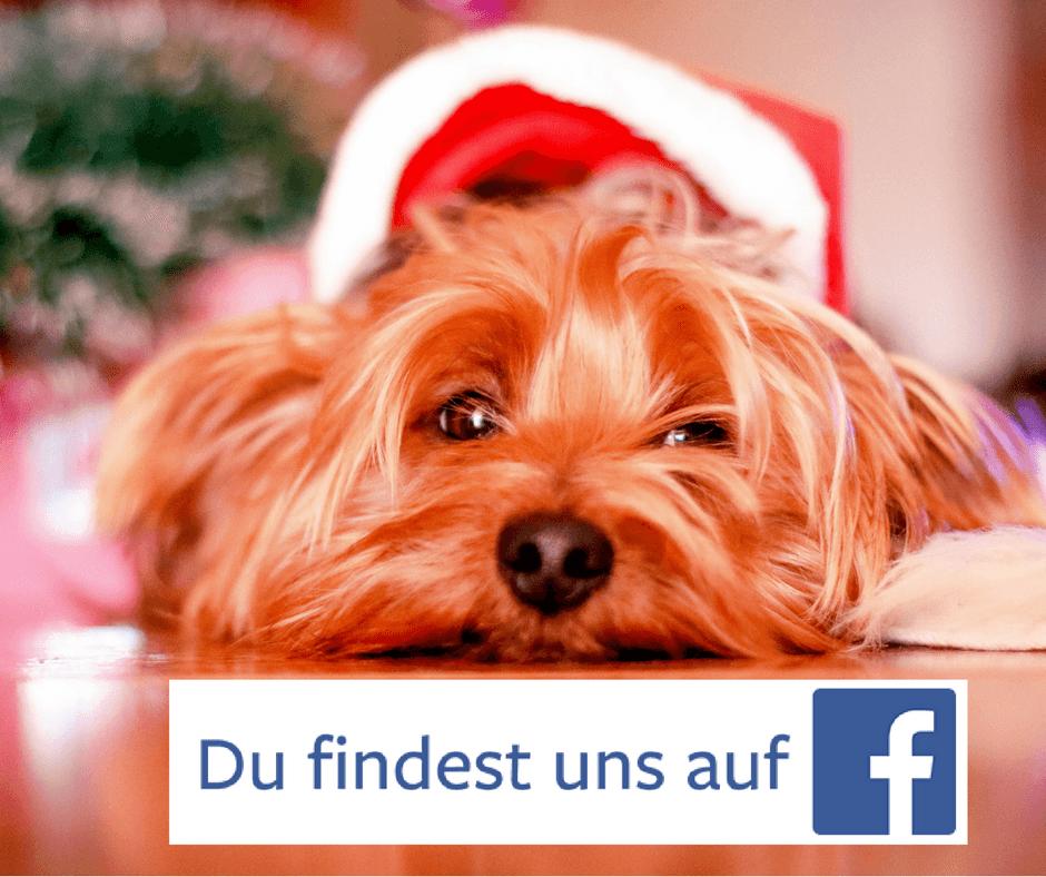 Der DBTB ist bei Facebook! 6